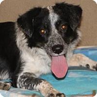 Adopt A Pet :: Roxy - Avon, NY