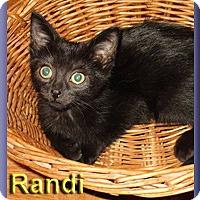 Adopt A Pet :: Randi - Aldie, VA