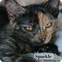 Adopt A Pet :: Sparkle - Temecula, CA