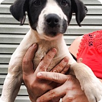Adopt A Pet :: Anniston - Southbury, CT