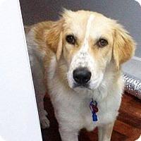 Adopt A Pet :: Phi Phi - Memphis, TN