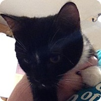 Adopt A Pet :: Corrigan - Spokane, WA
