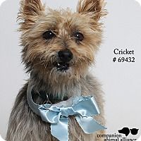 Adopt A Pet :: Cricket  (Foster Care) - Baton Rouge, LA