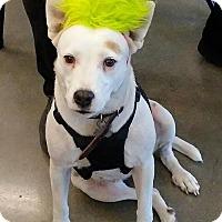 Adopt A Pet :: Blanca - Camden, SC