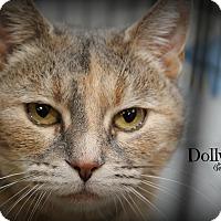 Adopt A Pet :: Dolly - Glen Mills, PA