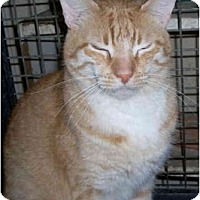 Adopt A Pet :: !!BARN CATS AVAILA - Youngsville, LA