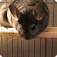 Adopt A Pet :: Olivia - Titusville, FL