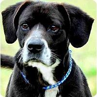 Adopt A Pet :: MORGAN - Wakefield, RI