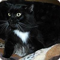 Adopt A Pet :: Seeley Booth - Ennis, TX