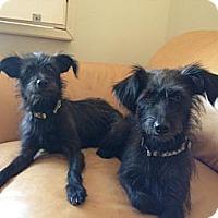 Adopt A Pet :: Cagney & Lacey - Phoenix, AZ