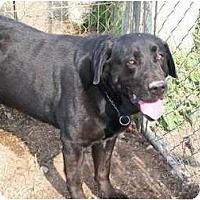 Adopt A Pet :: Oakland - Albany, NY