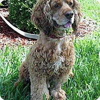Adopt A Pet :: Harry - Sugarland, TX