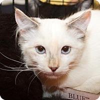 Adopt A Pet :: Kensi - Irvine, CA