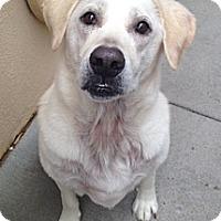 Adopt A Pet :: Newton - Foster, RI