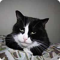 Adopt A Pet :: Ranger - Orillia, ON