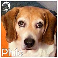Adopt A Pet :: Philo - Novi, MI