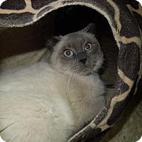 Adopt A Pet :: Lenni - Medina, OH