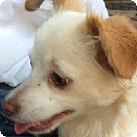 Adopt A Pet :: Twinkie - Sun Valley, CA