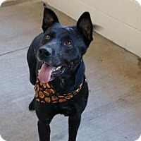 Adopt A Pet :: Franky - McKinney, TX