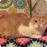 Adopt A Pet :: Gambit - Addison, IL