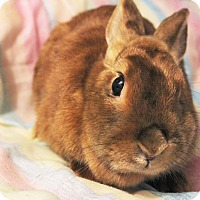 Adopt A Pet :: Rose - Hillside, NJ