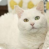 Adopt A Pet :: Kisa - Chicago, IL