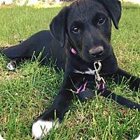 Adopt A Pet :: Hazel - Ogden, UT