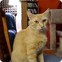 Adopt A Pet :: Marmalade - Middletown, CT