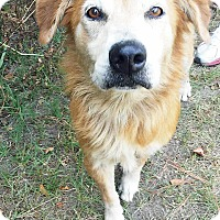 Adopt A Pet :: Zara - BIRMINGHAM, AL