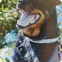 Adopt A Pet :: Shelby - Yelm, WA