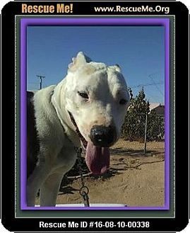 American Staffordshire Terrier Mix Dog for adoption in Encino, California - Simon