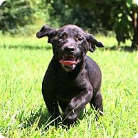 Adopt A Pet :: Skipper~ meet me! - Glastonbury, CT