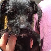 Adopt A Pet :: Pineapple - Harmony, Glocester, RI