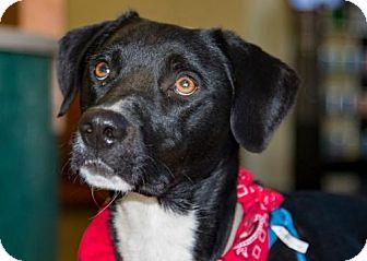 Labrador Retriever Mix Dog for adoption in Clovis, California - Jackson