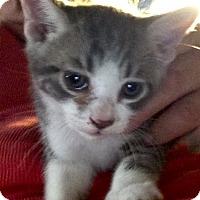 Adopt A Pet :: Zero - Beeville, TX