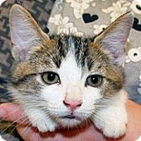 Adopt A Pet :: Chase - Wildomar, CA