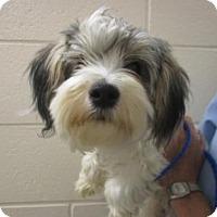 Adopt A Pet :: CHEESE - Reno, NV