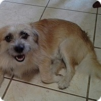 Terrier (Unknown Type, Small) Mix Dog for adoption in Whitney, Texas - Benji