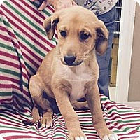 Adopt A Pet :: Piper - Windham, NH