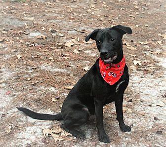Labrador Retriever Mix Dog for adoption in Jesup, Georgia - Kody