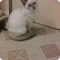 Adopt A Pet :: Gracie - Palm Springs, CA