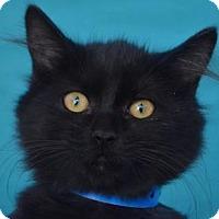 Adopt A Pet :: Prince - Visalia, CA