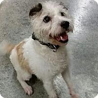 Adopt A Pet :: Rusty - Urbana, OH