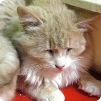 Adopt A Pet :: Jake - Las Vegas, NV