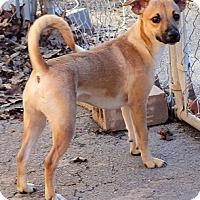 Adopt A Pet :: Simba - Concord, NC