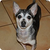 Chihuahua Mix Dog for adoption in Kempner, Texas - Lyla