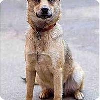 Adopt A Pet :: Lilah - Portland, OR