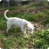 Adopt A Pet :: Willie Lee - Eden, NC