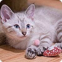 Adopt A Pet :: Thai - Chicago, IL