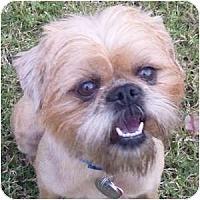 Adopt A Pet :: Tansy - Phoenix, AZ